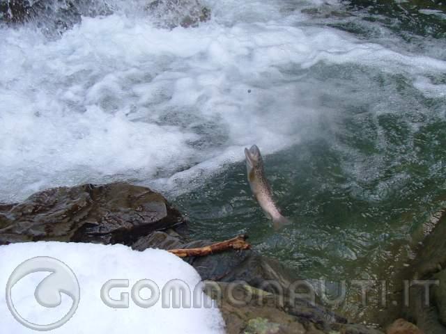 Pesca Alla Trota re Pesca Alla Trota