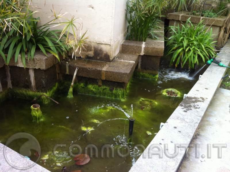 alghe nel laghetto di casa ForLa Casa Nel Laghetto