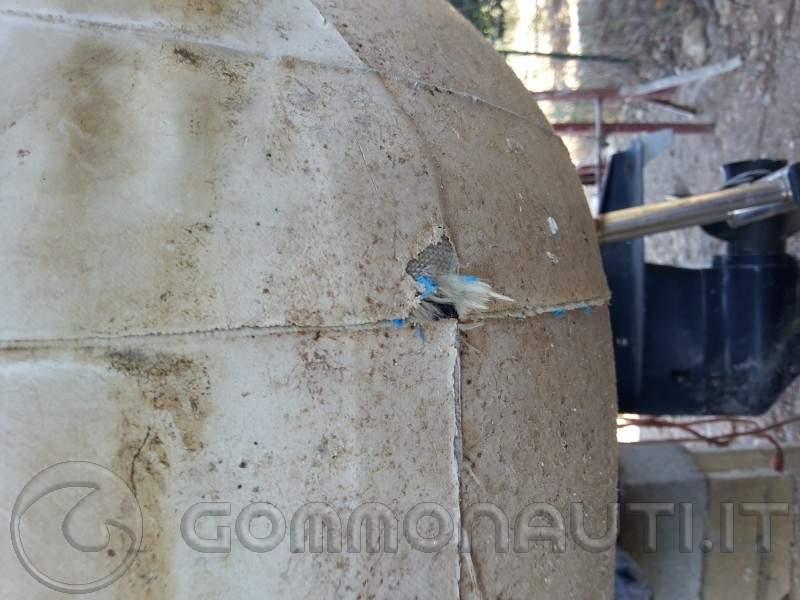 Gommone: apertura tubolare di poppa